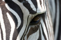 Animals (Fauna) portfolio