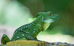 Costa Rican Wildlife portfolio