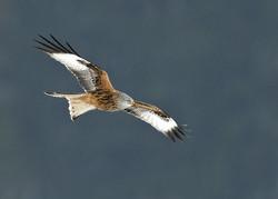 Birds of Prey portfolio