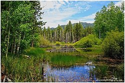 Lake Tahoe Pond