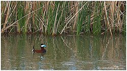 IMG_4207 a