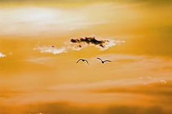 Nevada Birds portfolio