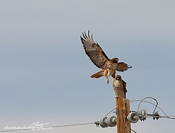 IMG_0934 a