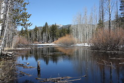Pond near Lake Tahoe