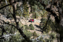 Jeep thru the Trees