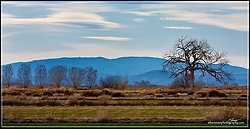 IMG_1756 a
