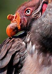 Birds portfolio