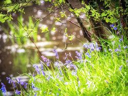 Plants portfolio