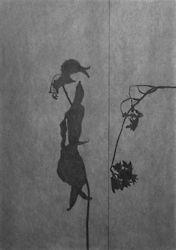 Flower Drawings portfolio