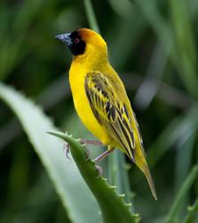 Tanzania Birds and Mammals portfolio