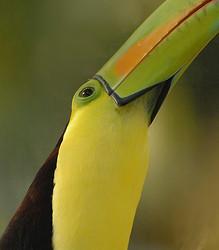 Birds from Belize and Guatemala portfolio