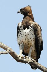 South Africa Birds and Mammals portfolio