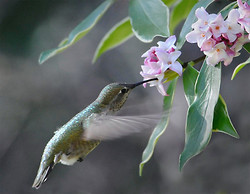Backyard Birds of Mercer Island portfolio