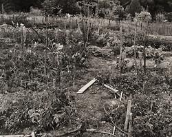The Garden Series portfolio