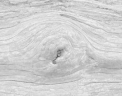 Driftwood #2, Rialto Beach WA (2014/D00772)
