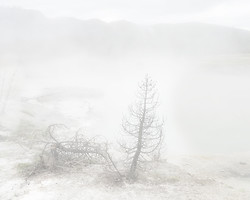 SteamedTrees, Yellowstone National Park, WY