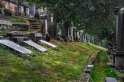 Dreaming of Green Fields Everywhere, Necropolis, Glasgow Scotlan