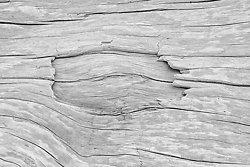 Driftwood #6, Rialto Beach WA (2014/D00786)