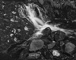 Falen Leaves and Wet Rocks, (2014/D01161)