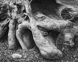 Hollows and points, Rialto Beach WA (2014/D00753)