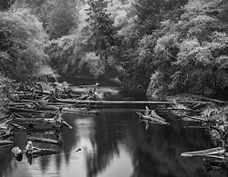 Driftwood and Rowboat, Kalaloch River, WA (2014/D00993)