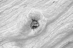 Driftwood #70, Rialto Beach WA (2014/D00770)