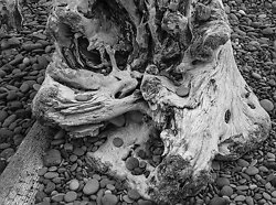 Driftwood 32, Rialto Beach WA (2014/D00632)