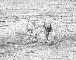 Driftwood 6, Rialto Beach WA (2014/D00756)