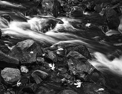 Leaves and Rapids, Columbia River Gorge, OR (2014/D01129)