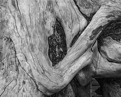 Driftwood Form 42, Rialto Beach, WA (2014/D00642)