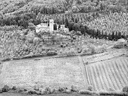 Vinyards and Olive Trees, Italy (5628)