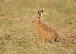 Brown Hare portfolio