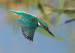 Kingfisher portfolio