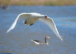 Mute Swan portfolio