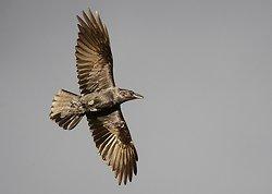 Raven portfolio
