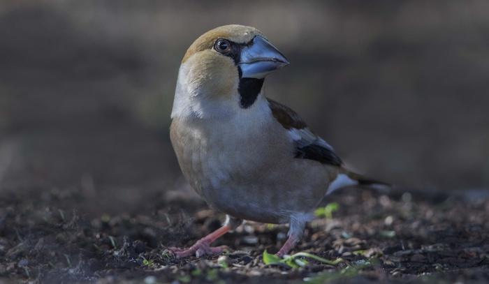 what is a bird watchers den called